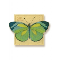 Green Butterfly Art Cards